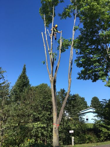 Abattage, élagage et taille d'arbre à Drummondville - Arbor Élagage MG inc.